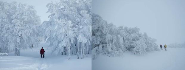 Vosges 2015 cheminement forêts landes